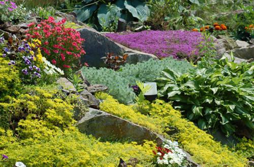 Растения для альпинария